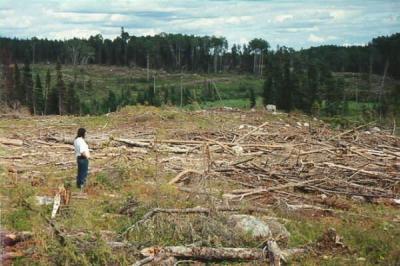 Evitemos la deforestación, cuidemos el planeta