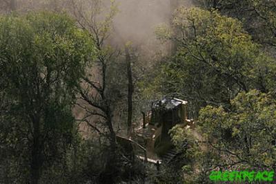 S.O.S: bosques y selvas en peligro